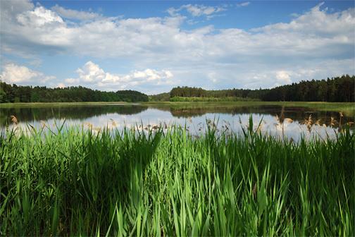 Rybník Držník